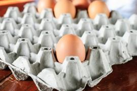 7 faktów o JAJKACH – co warto wiedzieć przed Wielkanocą