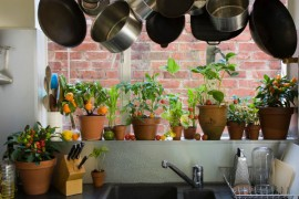 8 pomysłów jak EKSPONOWAĆ kwiaty doniczkowe W KUCHNI