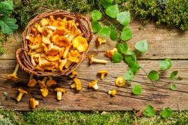 Makaron z kurkami w sosie śmietanowo-ziołowym