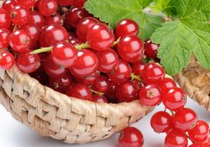5 powodów, dla których warto jeść CZERWONE PORZECZKI