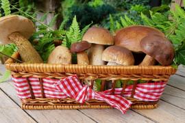 Wszystko o grzybach – czyli to co musisz wiedzieć przed grzybobraniem