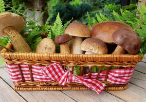 Puder/ Proszek z suszonych grzybów (idealny do zup, sosów, makaronu)