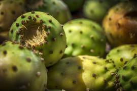 Jak obrać OPUNCJĘ figową?